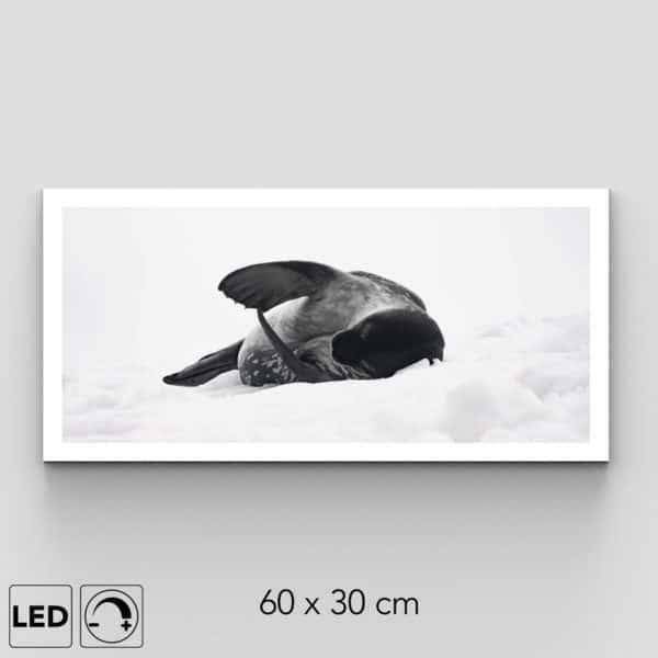 applique murale phoque antarctique